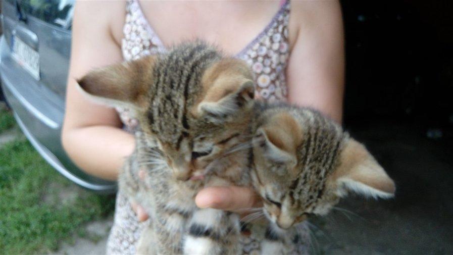 Kociaki do wzięcia