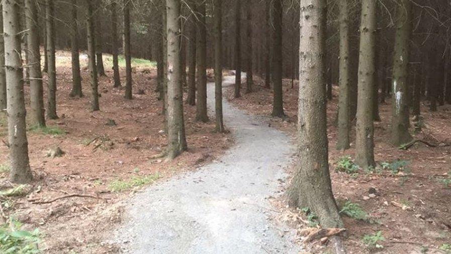 Krętą ścieżką poprzez las